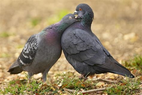 Pigeons Sex And Investing