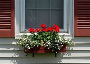 Window Box Ideas For New England Home Intuitive