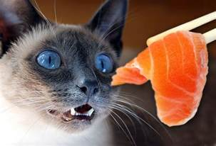 fish cat harmful foods your cat should never eat tuna milk