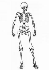 Skeleton Coloring Human Pages Posing Anatomy Printable Skeletal System Getcolorings Under Around Halloween Getcoloringpages sketch template