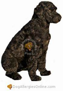 Allergy Friendly Hunting, Sporting and Working Dogs
