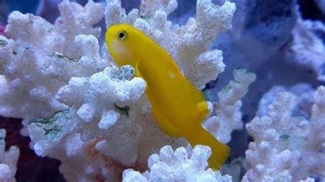 treat saltwater aquarium parasites  freshwater