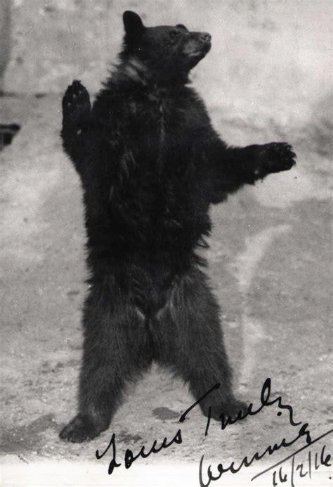 winnie pooh zoo london encyclopedia 1916