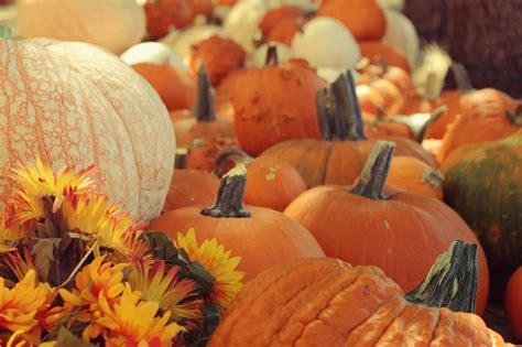 pretty pumpkins for fall beautiful cute fall photo photography image 457469 on favim com