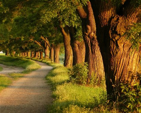Nature, Landscape, Trees, Path, Sunlight, Dirt Road