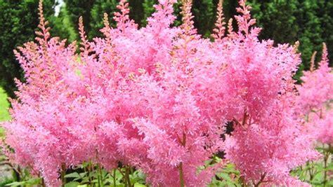 Passende Pflanzen Für Den Schattigen Garten Ndrde