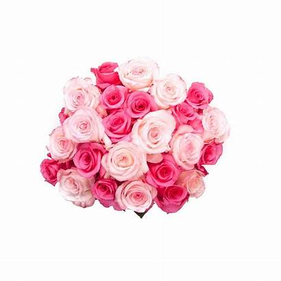 Bouquet Roses Pink Flowers Transparent Birthday Valentines