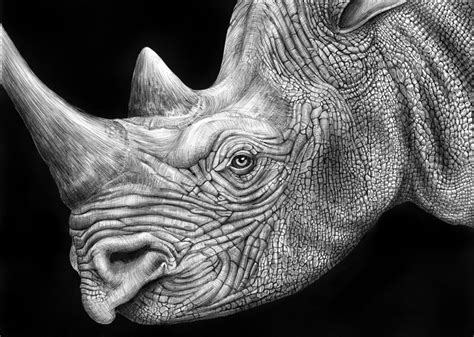 Detailed Image Detailed Animal Drawings Using Only Ink 171 Twistedsifter