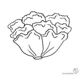 disegni di alimenti disegno di insalata da colorare disegni di alimenti da