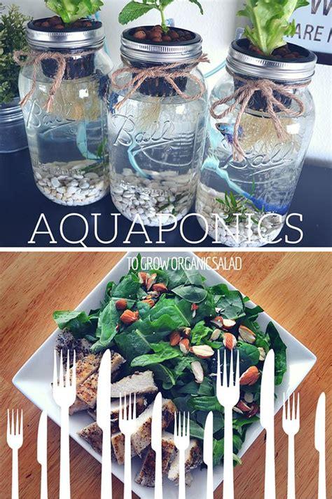 3 jar aquaponics kit build your own hydroponics