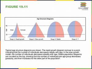 Wiring Diagram  31 Age Structure Diagram Definition Biology