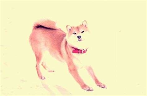Buy, Sell & Trade Dogecoin ($DOGE) & Cryptocurrency ...