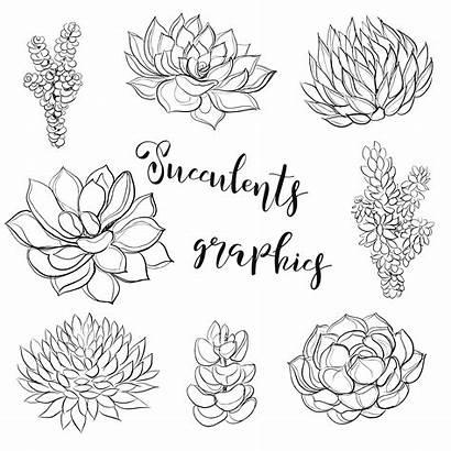 Illustration Coloring Succulents Vector Graphics Clipart