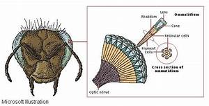 Insect Anatomy