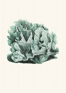 Coral Blue Drawing by Patruschka Hetterschij