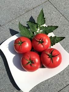 Zimmerpflanzen Alte Sorten : saint pierre rote tomate alte sorte aus frankreich ~ Michelbontemps.com Haus und Dekorationen