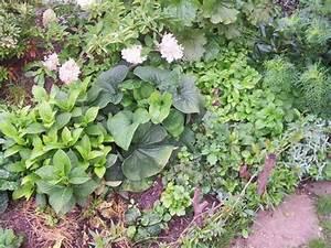Welche Pflanzen Passen Zu Rosen : welche pflanzen passen zu rhododendron die neuesten ~ Lizthompson.info Haus und Dekorationen