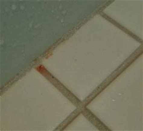 Serratia Marcescens Bathroom Dangerous by Pink Stuff Growing On Spectralock Ceramic Tile Advice
