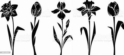 Spring Flowers Vector Daffodil Silhouettes Clip Illustration