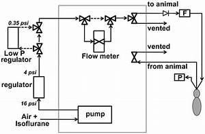 Schematic Diagram Of The Airflow Paths Of The Ventilator