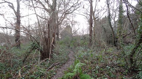 coombe hill wood wikipedia