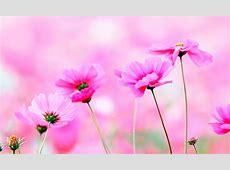 Imágenes de FLORES BONITAS y Hermosas [Con Frases]