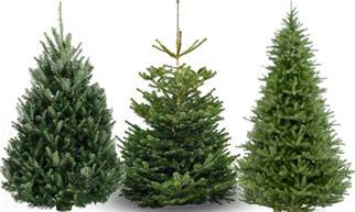 Christmas Tree Type Plants by How To Buy And Care For The Perfect Christmas Tree In