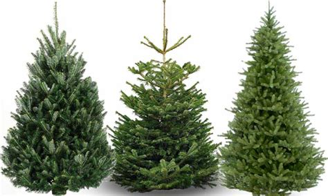 how to buy and care for the perfect christmas tree in