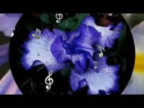 iris testo iris tra le tue poesie biagio antonacci con testo