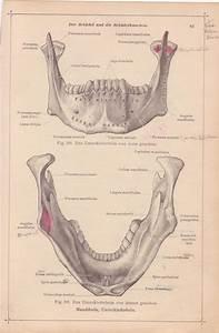 Vintage Medical Page  Anatomical Diagram  Medical Page For