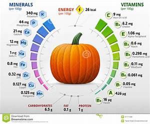 Vitamins And Minerals Of Pumpkin Stock Vector