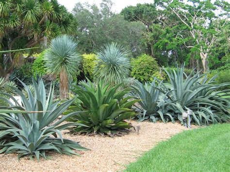 agave garden agave plants