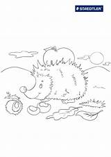 Hedgehog Coloring Realistic Animals Llama Templates Template Coloringtop sketch template