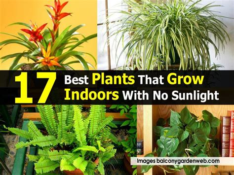 28 Outdoor Plants That Don T Need Sunlight 17 Best
