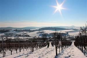 Free, Images, Landscape, Snow, Winter, Vineyard, Hiking