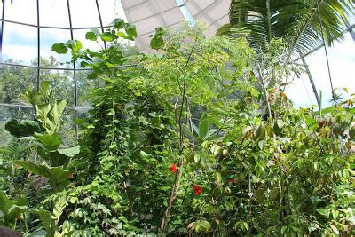 Verena Berchtold Botanischer Garten Zürich by Kultur Und Sehensw 252 Rdigkeiten Botanischer Garten Z 252 Rich