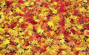 Fall Leaf Backgrounds - Wallpaper Cave