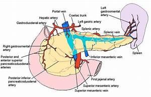 hemorrhagic pancreatitis: be afraid | DAILYEM