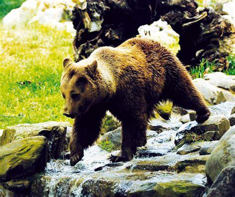 Giardino Zoologico Pistoia by Giardino Zoologico Di Pistoia Zoo Di Pistoia