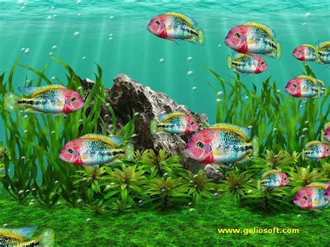 Aquarium Wallpaper Animated Free - best 25 animated screensavers ideas on
