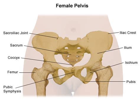 Pubic Bone Diagram by S I Joints And Pelvic Pilates Function With