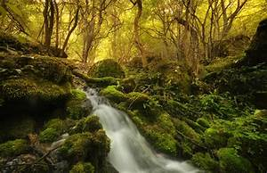 Plants, Nature, River, Forest, Wallpapers, Hd, Desktop, And, Mobile, Backgrounds