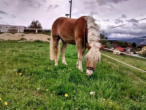 plan diet horse bone feed loss supplement