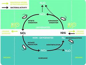A Simplified Scheme Of The Marine Nitrogen Cycle Showing