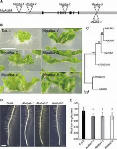 Alba Proteins Are Required For Rhizoid And Root Hair