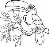 Coloring Birds Paradise Pages Bird Toucan Flowers Prey Adult Printable Easy Getcolorings Getdrawings Colorings sketch template