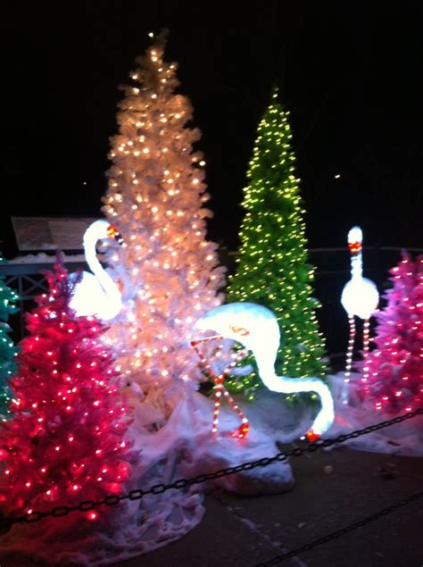 lights at the st louis zoo