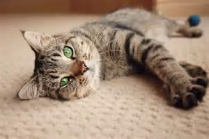 cats home decor purrfect interior design for feline friends