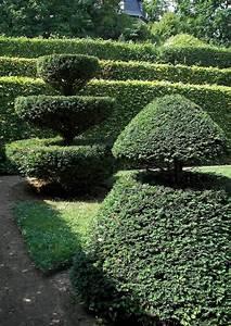 11 Pflanzen Methode : taxus baccata eibe immergr ne formgeschnittene koniferen ~ Lizthompson.info Haus und Dekorationen