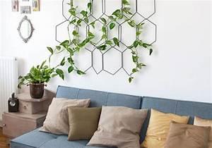 Plante Intérieur Grimpante : plantes grimpantes comment les entretenir elle d coration ~ Louise-bijoux.com Idées de Décoration
